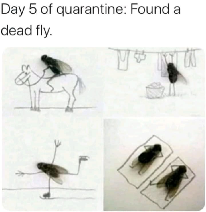 Day 5 of Quarantine Dead Fly