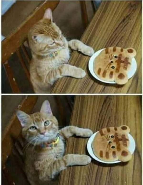 Cat Pancake